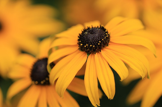 Žltý kvet.jpg
