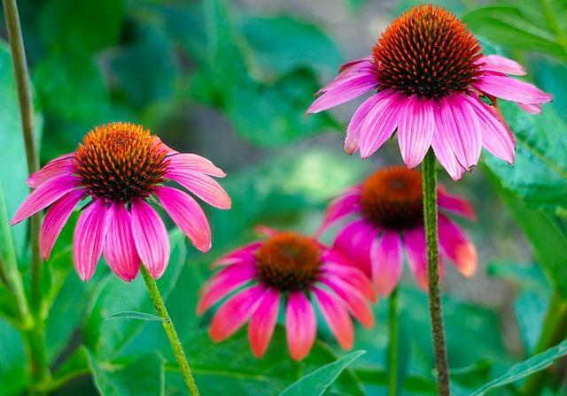 Ružové kvety.jpg