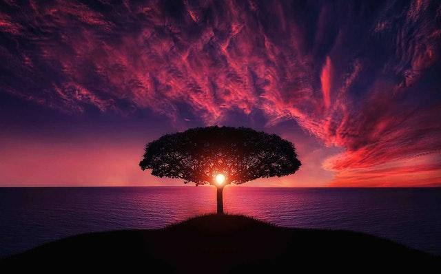 Strom na pobreží mora, za ním je západ slnka a červená obloha.jpg